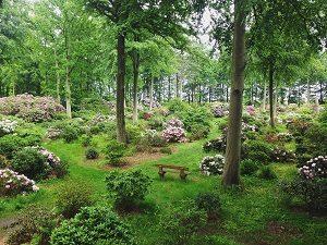 Kalender_rododendronpark
