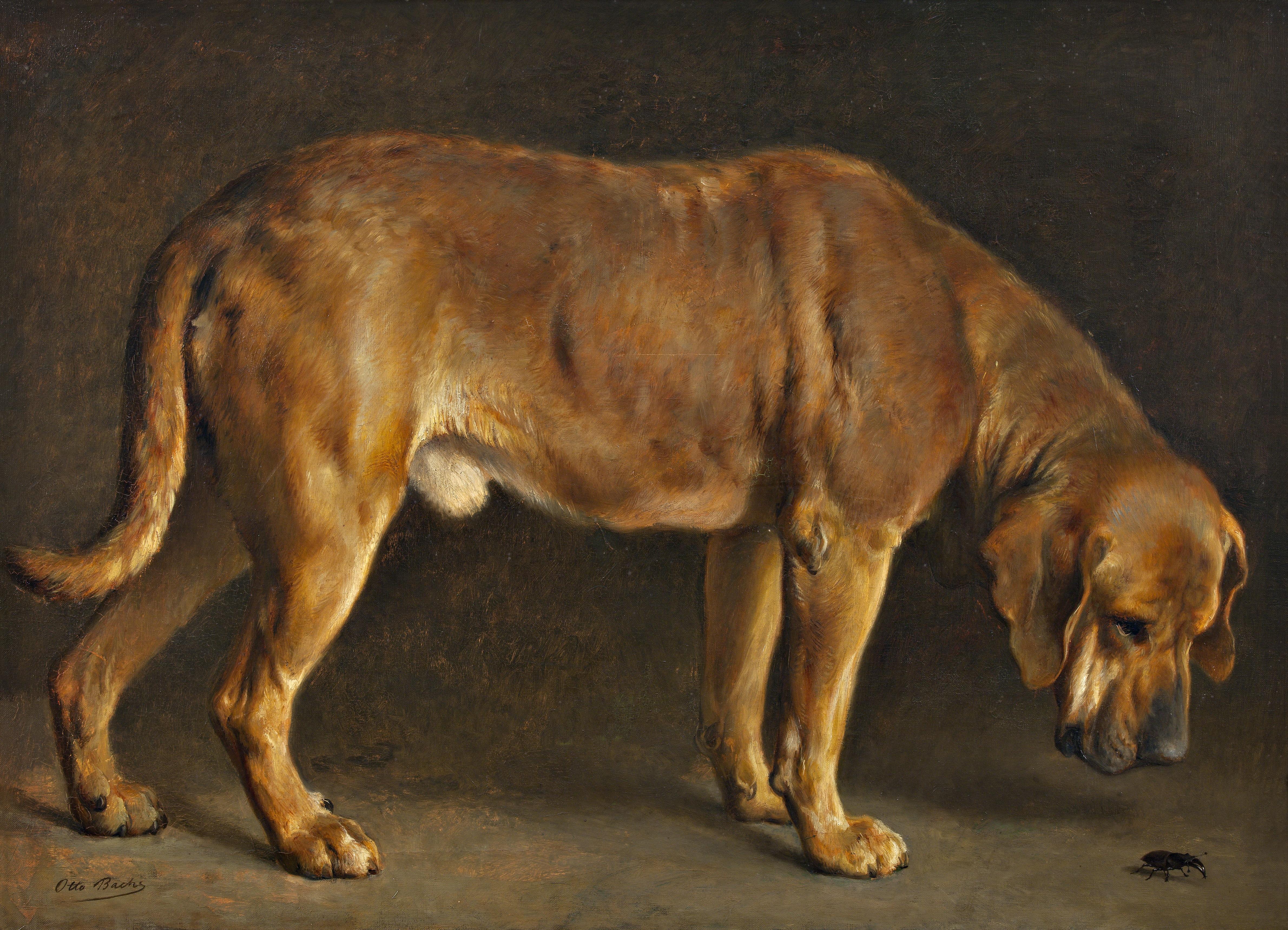 Maleri af Otte Bache, En broholmerhund ser på en eghjort, 1871. Nivaagaards Malerisamling