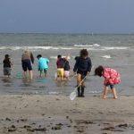 (Dansk) Familieudflugt: På jagt i vandkanten