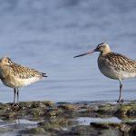 (Dansk) Udflugt: Fugletrækkets elite