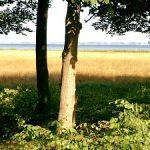 (Dansk) Udflugt: Fuglestemmetur