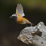 Fugletur til Nivå Strandenge